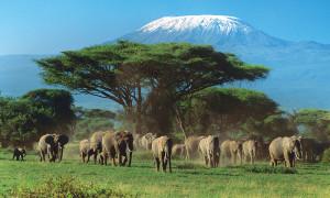 Відпочинок в Танзанії