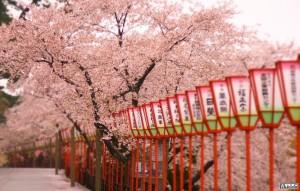 Тури до Японії