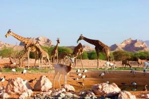 1461414736_safari_park_in_the_uae