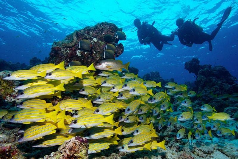 Найпопулярніші екскурсії на Мальдівах